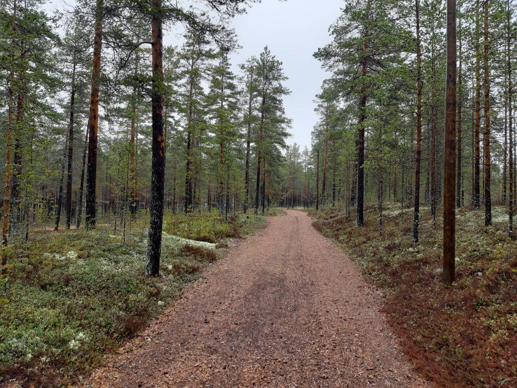 Waldweg nach Kalajoki, Tag 10 - Mein Fahrrad ist kaputt