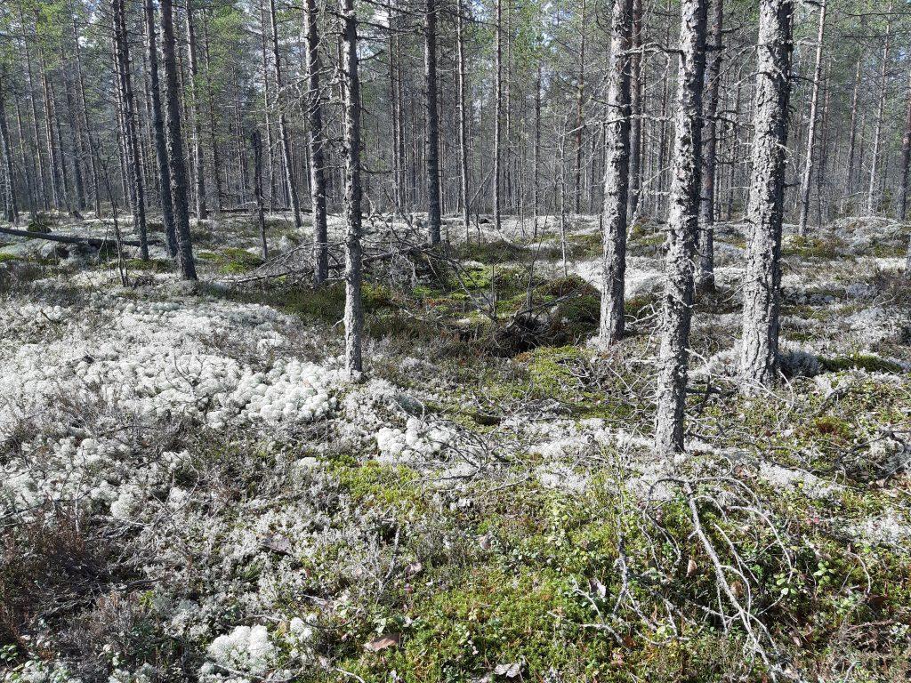 Wald, 14. Mai - Jung wie nie zuvor