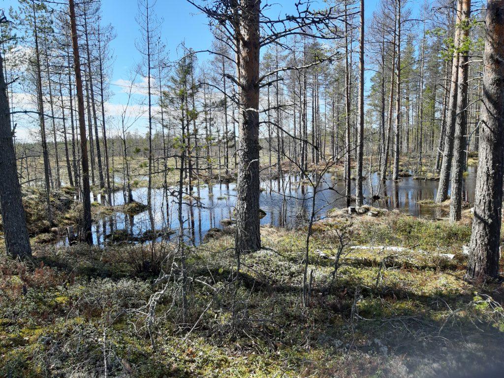 Sumpfgebiete, 14. Mai - jung wie nie zuvor