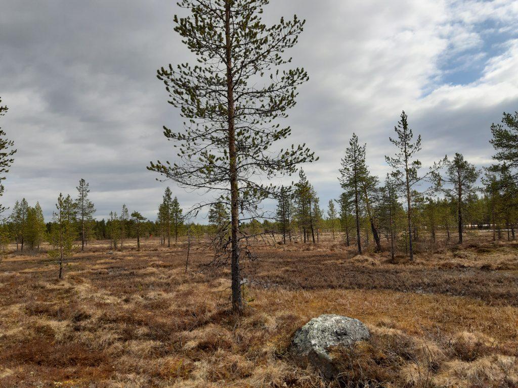 Sumpfgebiete im Norden Lapplands, Skigebiete